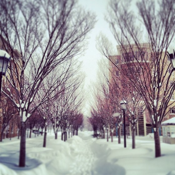 @redvelvetmarie-Standard-tree-pic.-donthate-boston-winter-snow-blizzard2013-nemo-